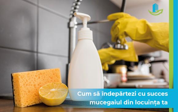 Cum sa indepartezi cu succes mucegaiul din locuinta ta
